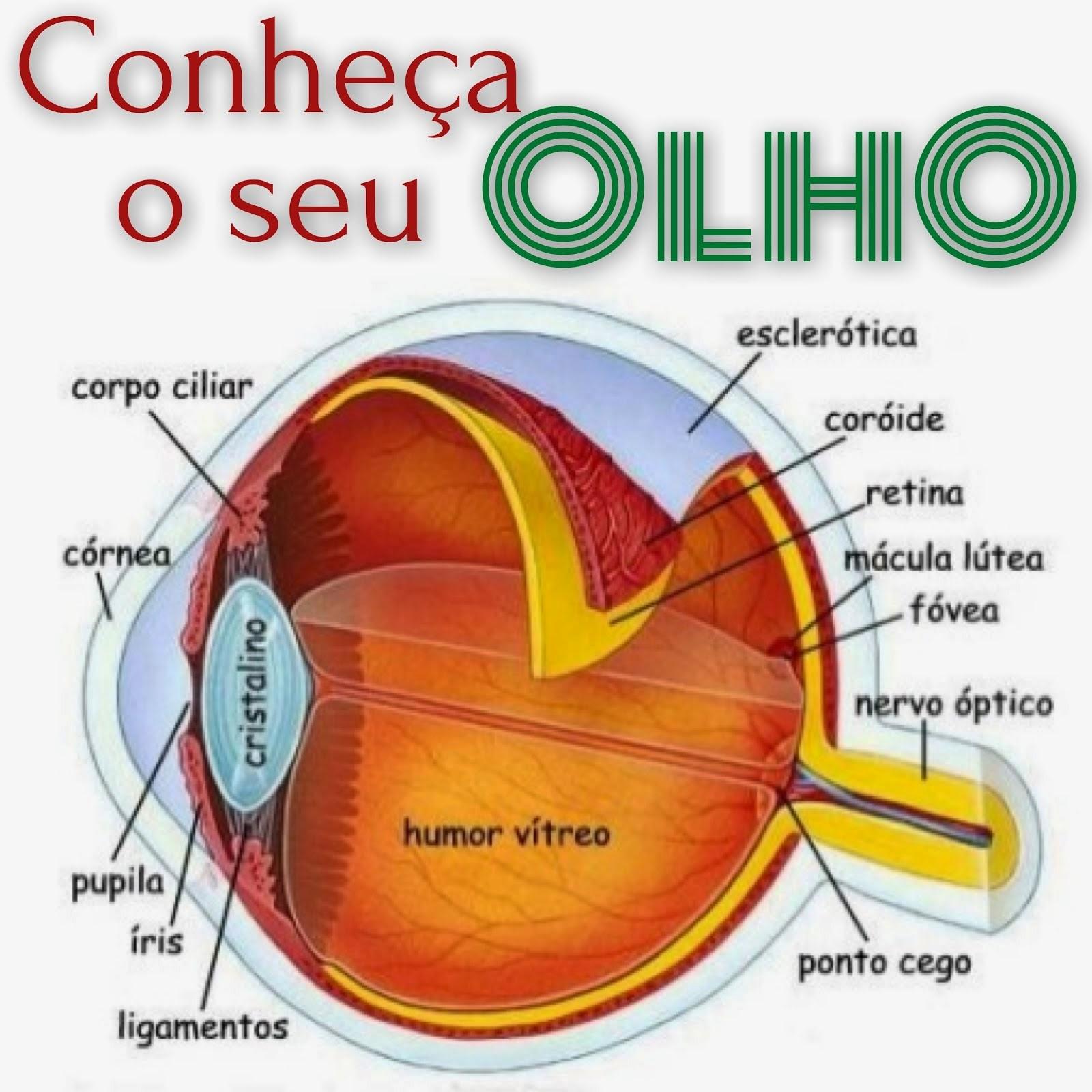 Clique na imagem e conheça um pouco do universo da visão.