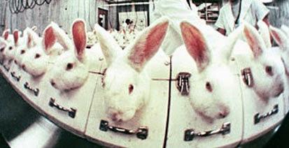 petas lista över djurtestat smink