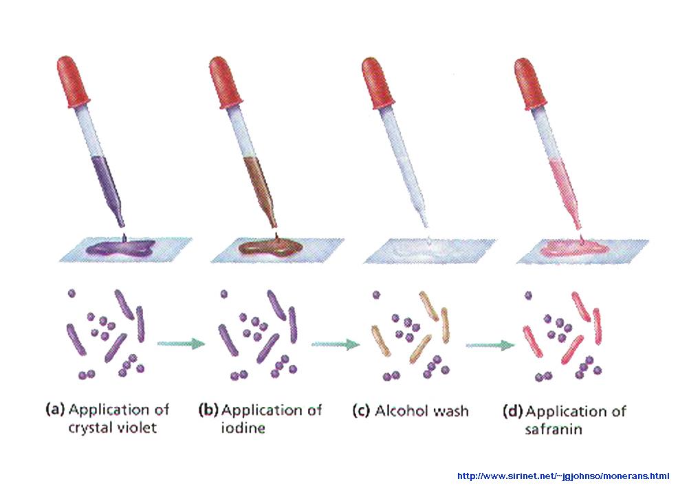 microbio lab procedures
