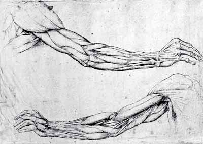 DaVinci forearms