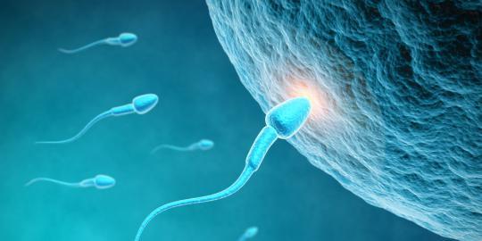 Cara Meningkatkan Kesuburan Dan Kualitas Sperma