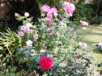 The rosegarden