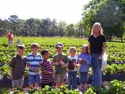 Manfaat Field Trip untuk Pendidikan Anak-Anak, Keuntungan Belajar Di Lapangan untuk Anak, Belajar dengan Alam dan Lingkungan