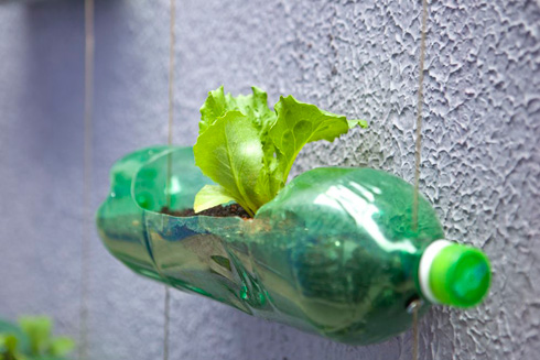 Autossustentável: Jardim Vertical Com Garrafa Pet