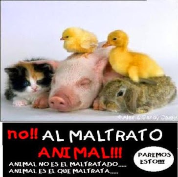 No al maltrato animal