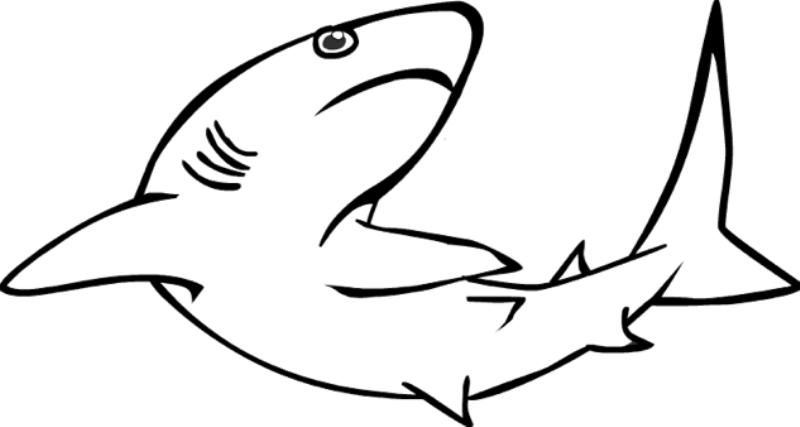 mewarnai ikan hiu