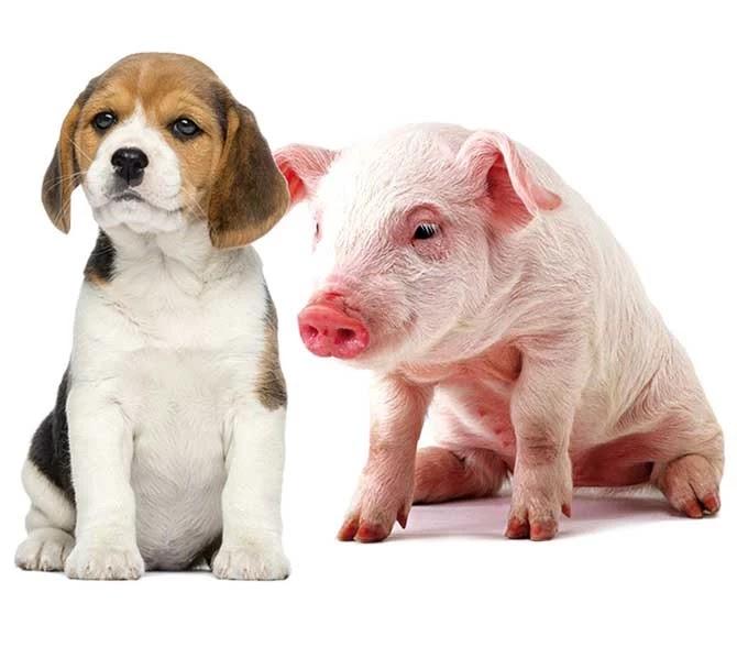 Por um mundo mais justo com os animais
