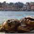 Ratusan Mayat Mengerikan Di Sungai Yang Dianggap Suci Di India