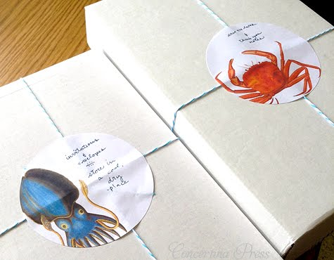Cuttlefish and Crab Nautical Packaging
