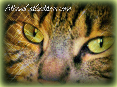 green-eyed tabby cat