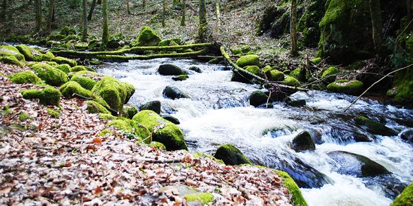 La Forêt-Noire, Bade-Wurtemberg, Allemagne