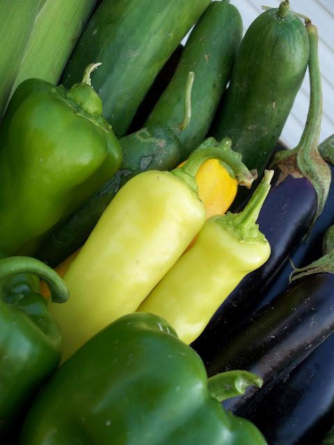 Organic peppers cucumbers corn eggplant