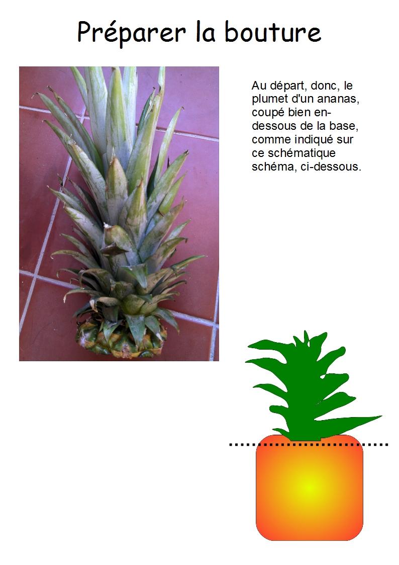 Culture des ananas en pot bouture d 39 un ananas for S occuper d un citronnier en pot