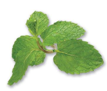 Obat Herbal Redakan Batuk Daun Mint