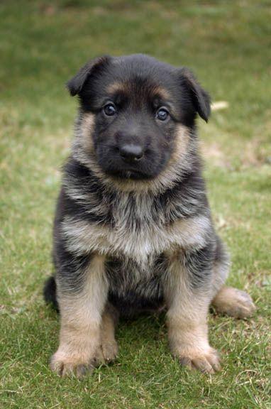 I Am Legend Puppy Okay  I m sold on an I Am