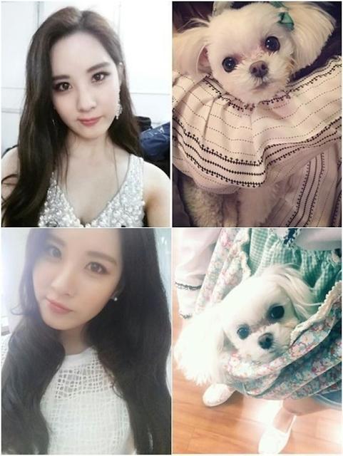 Girls Generation pet Instagram Taeyeon Sunny Tiffany Hyoyeon Yuri Sooyoung Yoona Seohyun poodle Maltese Yorkshire dog cat Pomeranian K-Pop enjoy korea hui