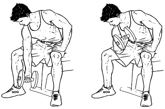 Concentration Curl - Salah satu cara memperbesar oto lengan
