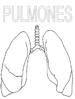 Ventilacion pulmonar y alveolar