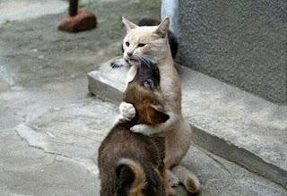 kucing anjing