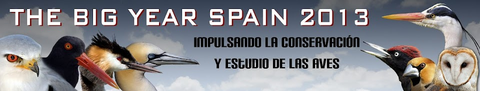 THE BIG YEAR SPAIN 2013. Impulsando la conservación y estudio de las aves