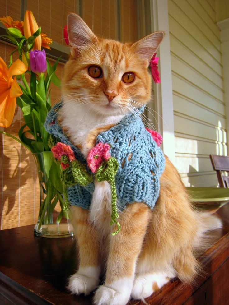 10 Fashionista Cats