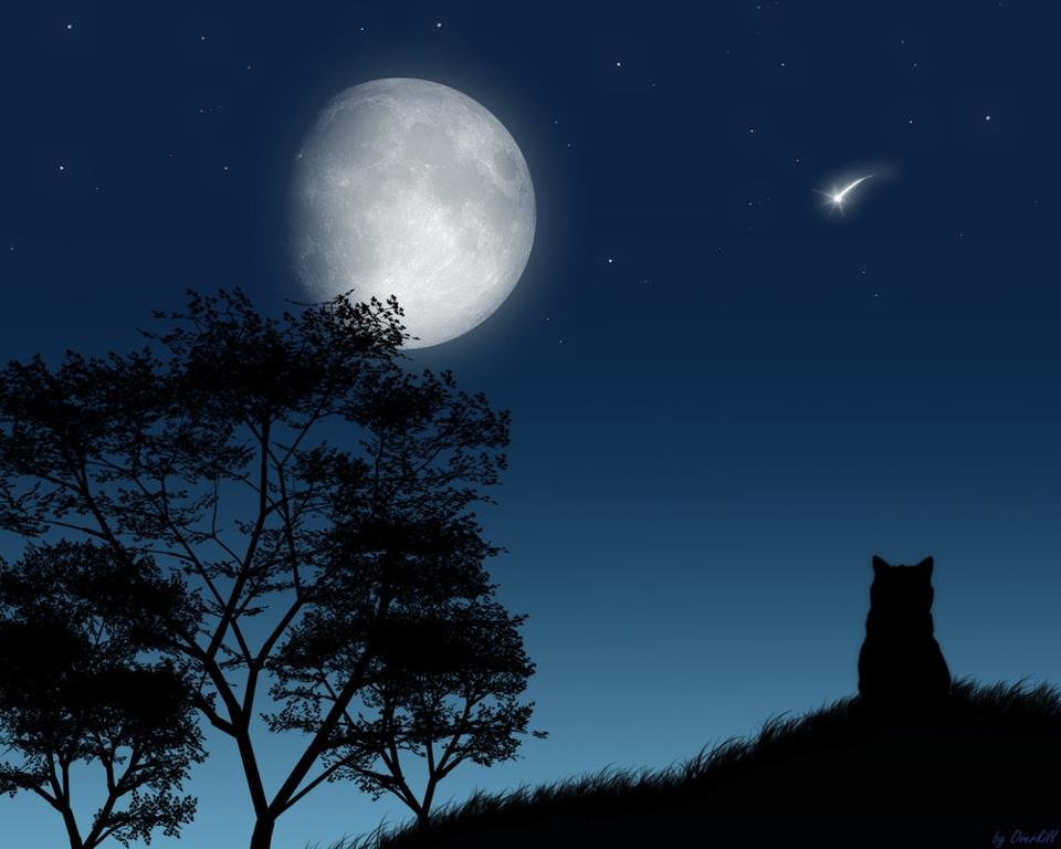 Image result for images of lots of animals looking at the moon
