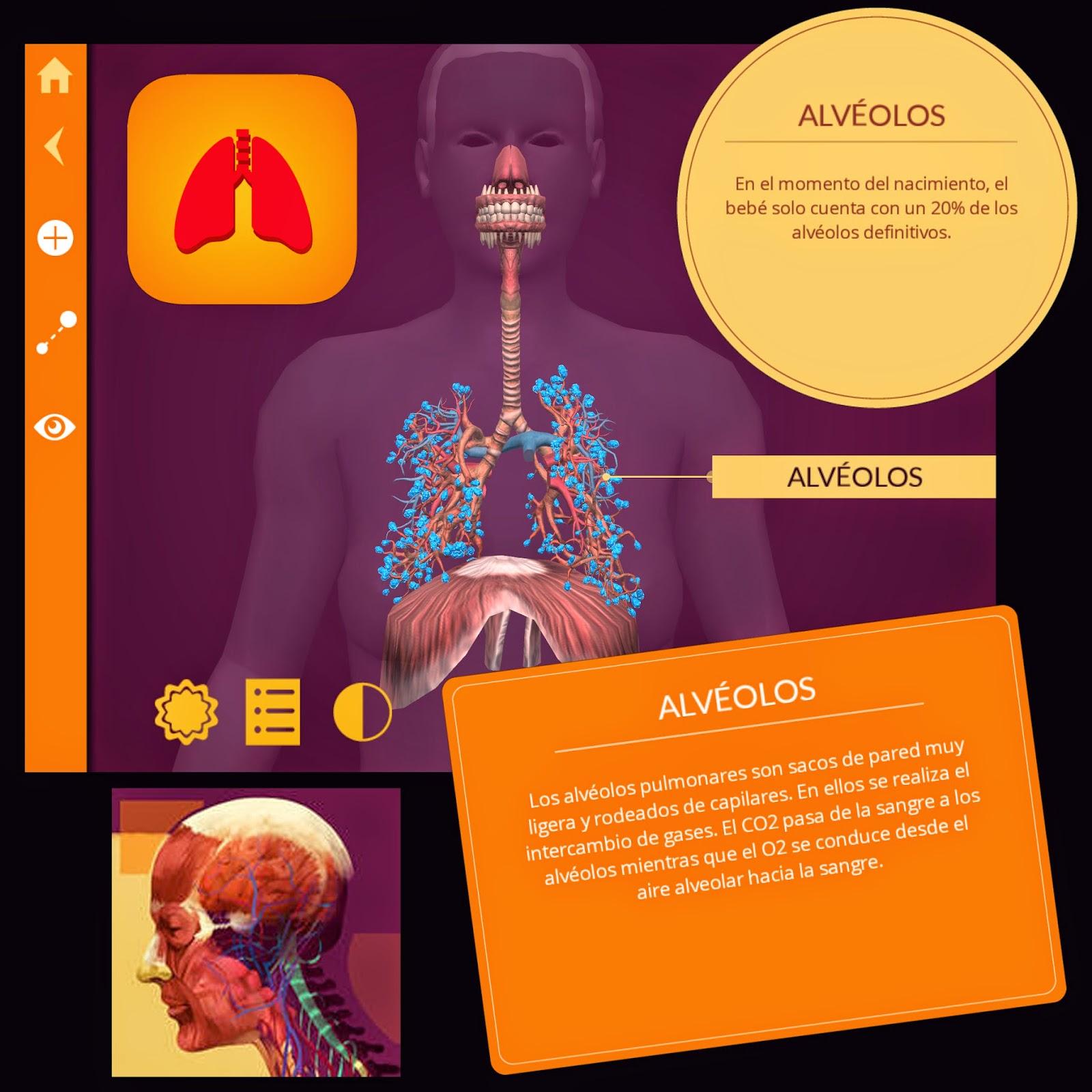 El cuerpo humano en Realidad Aumentada con Arloon Anatomy - PROYECTO ...