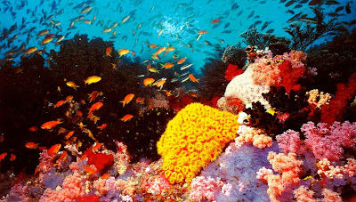 (Australia) – The Great Barrier Reef