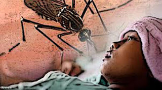 inilah cara ampuh menangkal bahaya penyakit dbd