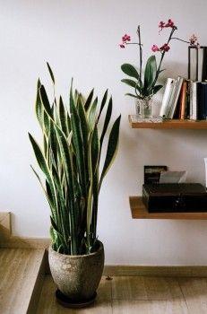 Piante da appartamento che purificano l\'aria