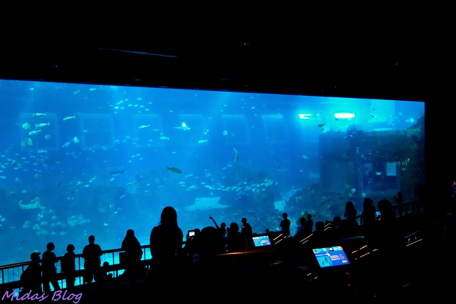 Midas Food N Travel Blog S E A Aquarium Marine Life Park Rws Part 2