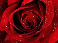 Tempo, Rosa, Importante, Frase de Carinho, Frase de Amor, Relacionamento,