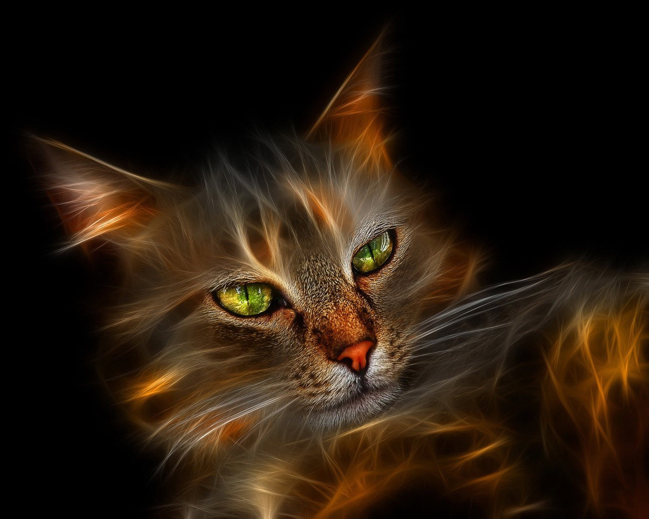 http://1.bp.blogspot.com/-iBe3lNSc520/TdEown5XMyI/AAAAAAAAH1A/oMezN8mC7B8/s1600/Windows_7_Wallpaper_Cat.jpg