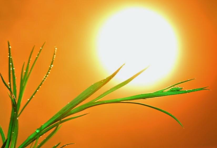 sol-hermoso