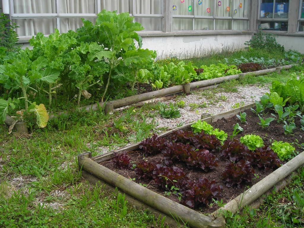 Osmarhil romero huerto escolar for Como evitar que salga hierba en el jardin