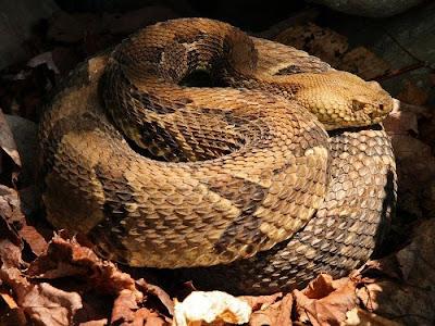 Bệnh nấm ở loài rắn