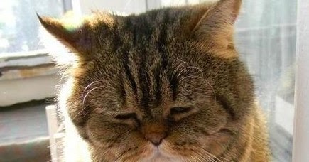 Foto divertenti foto micione assonnato for Buongiorno assonnato
