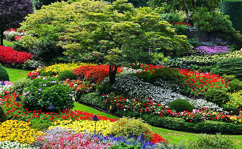 How to Create Beautiful Garden