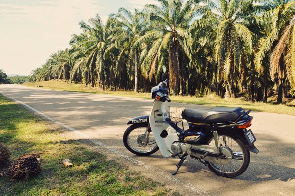 Motor bike ride through the palm plantations, Taman Negara, Malaysia
