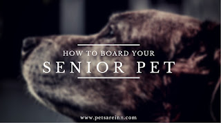 Senior Pet Boarding
