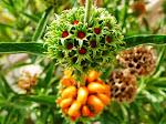 Botánica Cubana