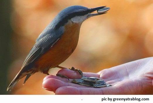 memberi-makan-burung-untuk-terapi