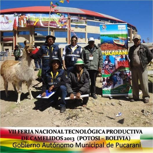 PRESENCIA DE PUCARANI EN LA FERIA NACIONAL DE CAMÉLIDO, POTOSI.