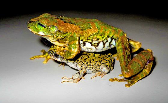 leap-frog-fucking