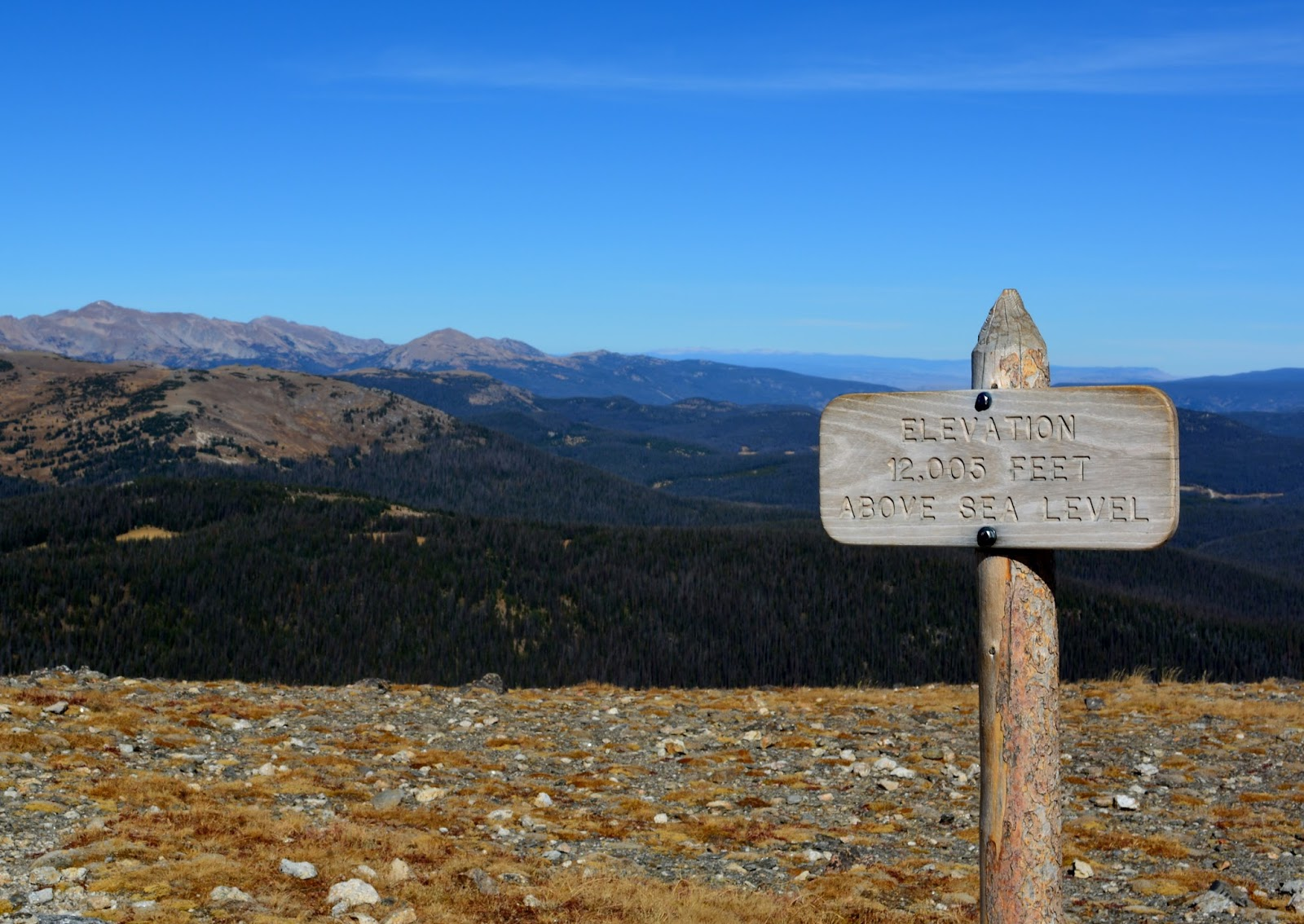 cozy birdhouse | 12,005 feet up on trail ridge road in rocky mountain national park