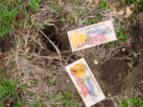 Catching Voles with Mouse Traps