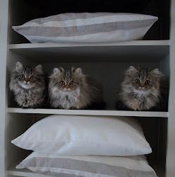 Figaro, Dopey en het vrouwtje