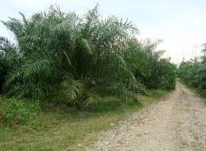 trek-kelapa-sawit.jpg