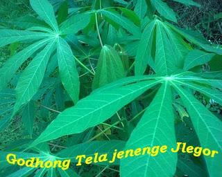 ORANG CERDAS (SMART PEOPLE): Jenenge Godhong (Nama-nama Daun dalam