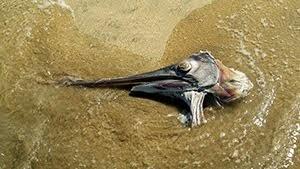 Head of a marlin on the beach in Jimbaran